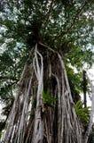 Perdana Botanical Garden Royalty Free Stock Image