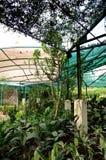 Perdana Botanical Garden Stock Image