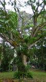 Perdana Botanical Garden Stock Images