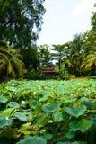 Perdana ogród botaniczny kuala Lumpur Malezja obraz royalty free