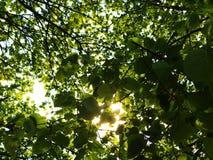 Perdido en el bosque Imagenes de archivo