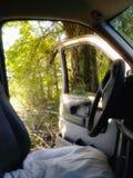 Perdido en el bosque de Tejas imagen de archivo libre de regalías