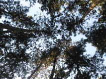 Perdido na floresta imagem de stock royalty free