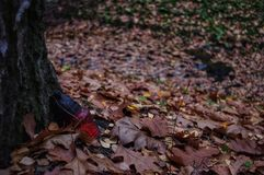 Perdido na floresta imagens de stock royalty free