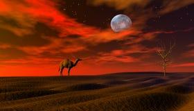 Perdido no deserto Fotos de Stock