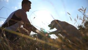 Perdigueiro de Labrador ou de ouro que senta-se na grama verde e que dá a pata a seu proprietário Cão que treina fora Raios de Su video estoque