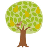 Perdiz em uma árvore de pera ilustração stock