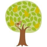 Perdiz en un árbol de pera Fotos de archivo