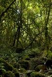 Perdu dans la jungle, l'Afrique du Sud image stock