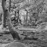 Perdu dans les bois, où aller ? images stock