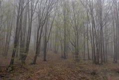 Perdu en brume 05 Image stock