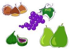 Pere delle castagne del fico dell'uva Immagine Stock