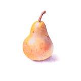 Pere dipinte a mano dell'acquerello, pera gialla, intera pera Immagini Stock