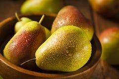 Pere sane organiche verdi Immagine Stock