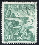 Peregrine Falcon. CZECHOSLOVAKIA - CIRCA 1938: stamp printed by Czechoslovakia, shows Peregrine Falcon Sokol Emblem, circa 1938 royalty free stock photography