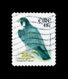 Peregrine Falcon (Falco peregrinus), Bird Definitives 2002-2004. MOSCOW, RUSSIA - NOVEMBER 26, 2017: A stamp printed in Ireland shows Peregrine Falcon Stock Photography