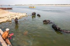 Peregrinos en los bancos del río santo de Ganga varanasi Imagen de archivo