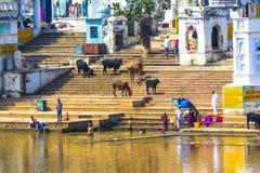 Peregrinos en un Ghat de baño en el lago santo Pushkar Foto de archivo