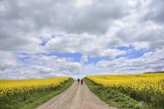 Peregrinos na estrada entre campos da colza foto de stock royalty free