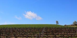 Peregrinos que andam através dos vinhedos infinitos e dos campos verdes sob o sol de uma manhã bonita da mola, Camino de Santiago Fotos de Stock