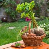 Perejil, apio y zanahorias Foto de archivo