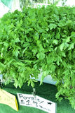 Perejil, en el mercado del granjero local, ningunos pesticidas imagen de archivo libre de regalías