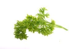 Perejil, hierba y especia de Freh foto de archivo