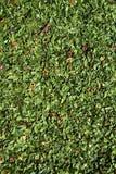 Perejil verde secado especia como fondo imagen de archivo libre de regalías