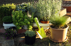 Perenial and herbs planting stock image
