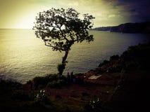 perenn tree Royaltyfri Bild