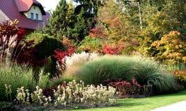 perennial травы Стоковое Изображение RF