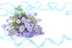 Perennial aster bouquet Royalty Free Stock Image