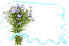Perennial aster bouquet Royalty Free Stock Photo