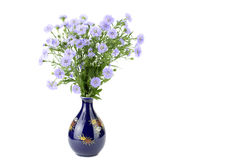 Perennial aster in a vase Stock Images