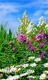 Perennial border Stock Images