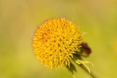 Perennial de la flor combinada Fotos de archivo