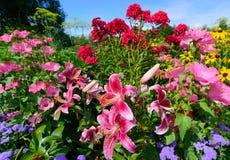 Perennial Flowers - Horizontal Stock Photos
