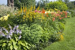 Perennial Garden Stock Photos