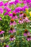 Perennial Garden Stock Images