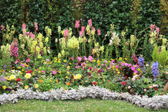 Perennial  garden flower bed in spring. At flower show Stock Photos