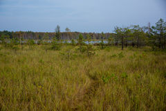 Perennial grasseson wetlands. Perennial grasses growing on wetlands during autumn stock photo