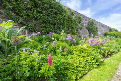 Herbaceous border Royalty Free Stock Photography