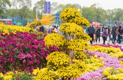 Chrysanthemum. Perennial herbs, leaves ovate with a handle, the edge has a notch or serrate, autumn flowering. As a result of artificial cultivation, many Royalty Free Stock Image