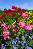 Perennial kwiaty - Vertical zdjęcia royalty free