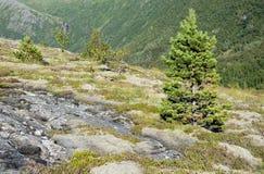Perennial plants on rural mountain Royalty Free Stock Image