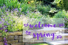 Perennial spring garden. Welcome Spring message on a beautiful perennial spring flower bed with blooming pelargonium Stock Images