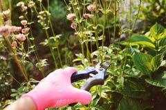 Perennials do aparamento após a florescência fotografia de stock