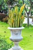 Perennials or shrubs Stock Image