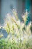 Perent gräs Arkivbilder