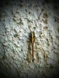 Perezoso, dragón, moscas, el dormir, no visto Foto de archivo